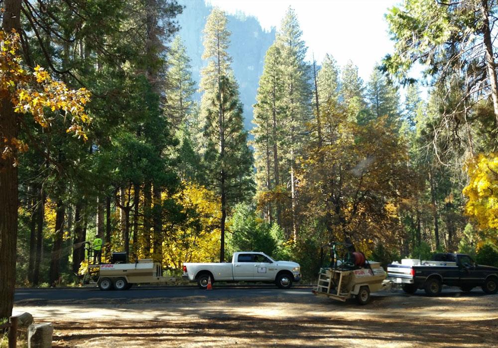 Tree Mitigation Services