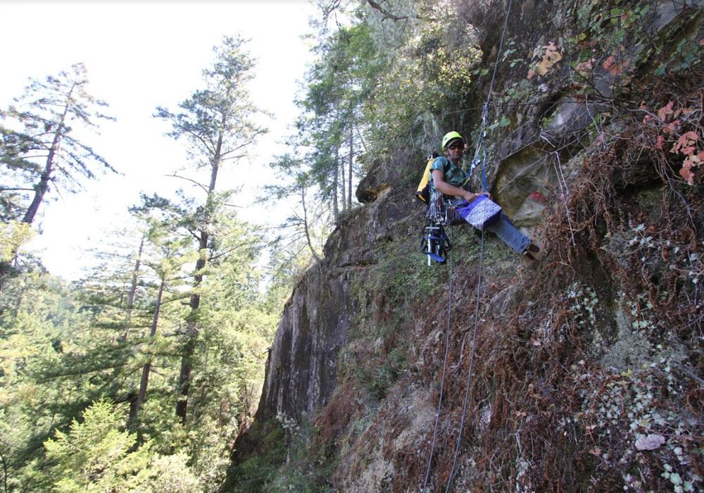 Sugar Pine Reservoir Recreation Complex Hazard Tree Mitigation
